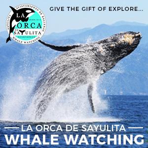 Resultado de imagen para whale watching sayulita mexico