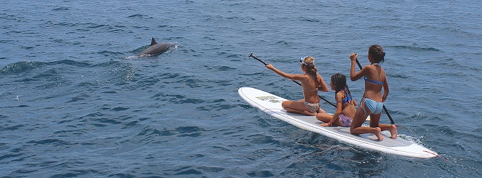 sayulita boat tour with paddleboards and a dolphin